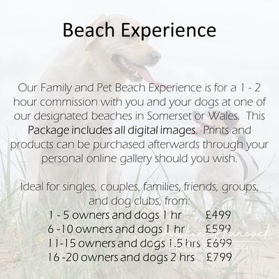 beach experience - pets